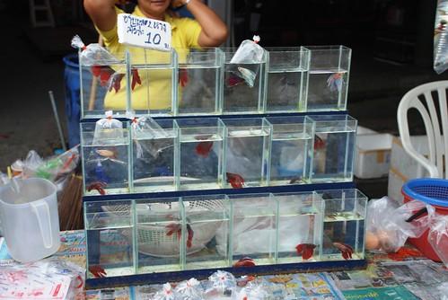 Kampffisch im Glas für 10 Baht (20 Cent)