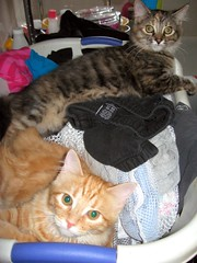 In the Laundry Basket