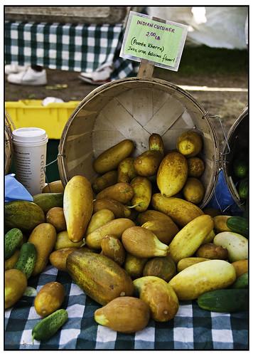 Indian Cucumber