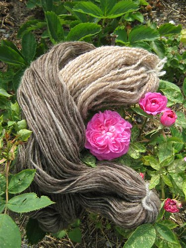 Wool and Roses