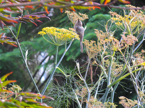 bird in the fennel