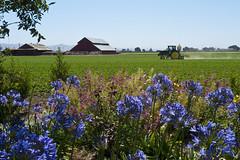 Soledad field