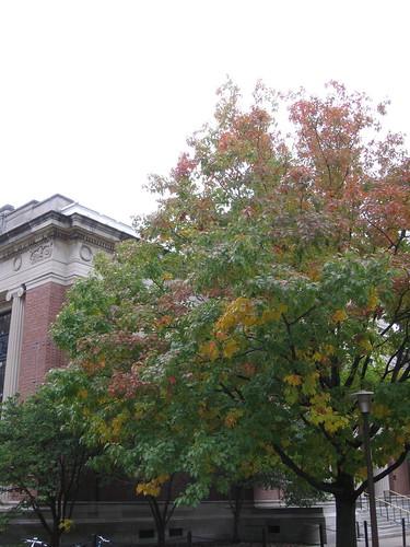 Transition Thursday - Week 3 - Quercus alba