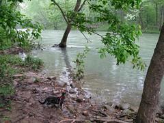 Kiki on the Buffalo River
