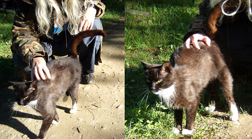 20090705 - X-Day - GEDC0374-diptych-GEDC0366 - Carolyn petting the Brushwood kitty - please click through to leave a comment on FlickR