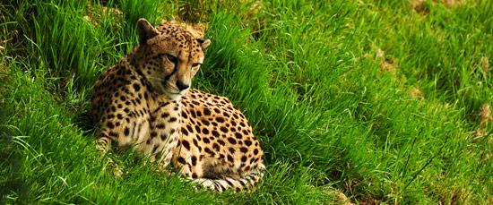 3744609766_8a17e343b4_o The Wildlife Park at Cricket St Thomas -  Chard Somerset, UK UK West Country  Wildlife UK Somerset Gardens