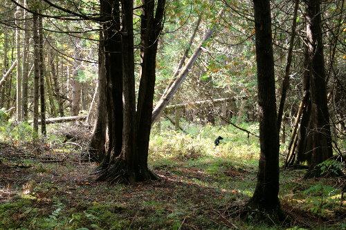 woods17