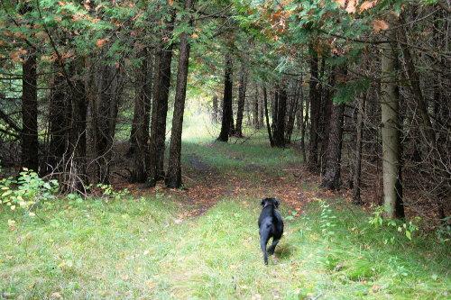 woods25