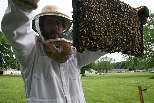holding up a frame full of bees