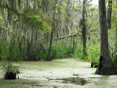 Honey Island Swamp - I wasnt kidding about it being beautiful