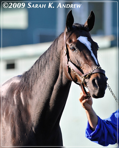Zenyatta to race in 2010
