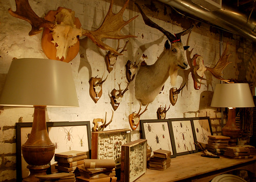 Antlers, Horns, Goat, and Insects