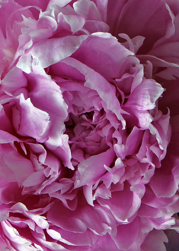 Soft and Pink Close Up
