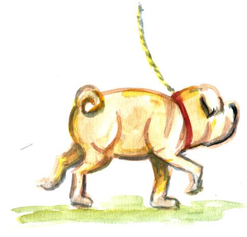 pug-dog