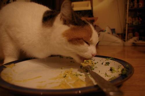 cat eats vegan cheese