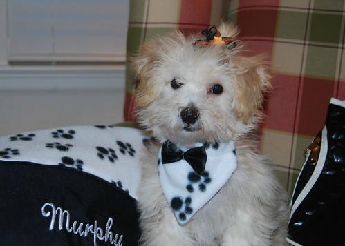 Murphy 016