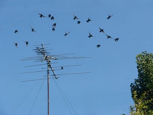 bird.antenna