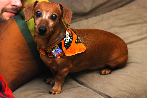 Petie and his snazzy neckerchief