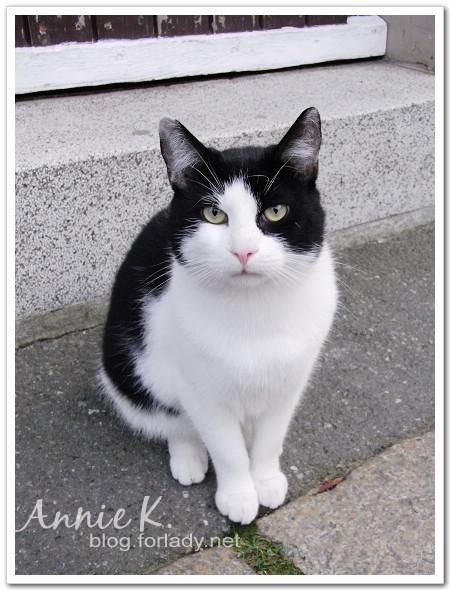 哥斯拉之貓朋友