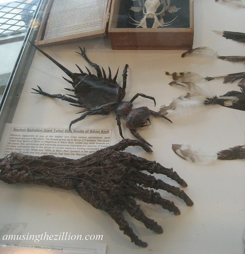 Mummified Six Fingered Witch Hand & Giant Stag Beetle by Takeshi Yamada. Photo © Tricia Vita/me-myself-i via flickr