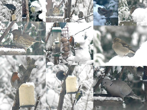 Garden birds in the snow