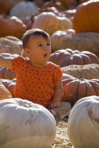 Ooooh a Pumpkin!