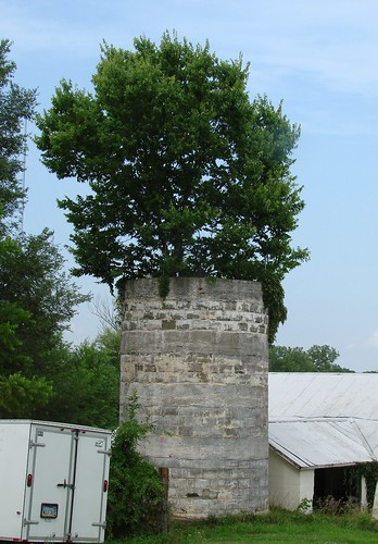 Silo wlth tree
