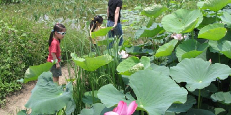 【賞花】白河的荷花已盛開(4.10ys)