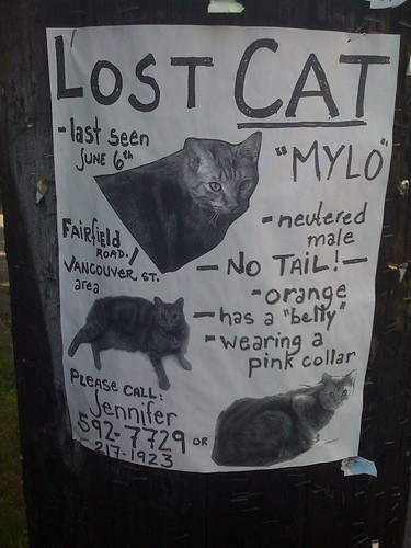 Another Lost Cat