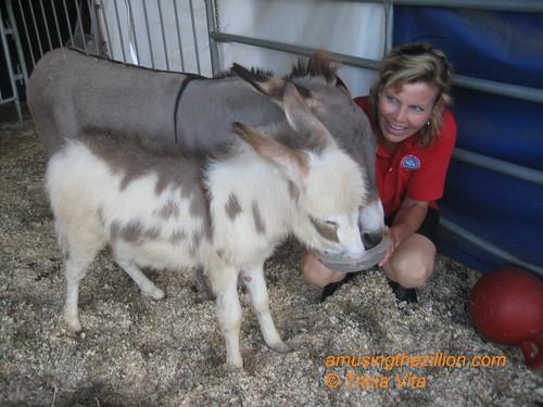 Heidi Herriott with Mini Donkeys at the Coney Island Boom a Ring Circus Menagerie.  Photo © Tricia Vita/me-myself-i via flickr