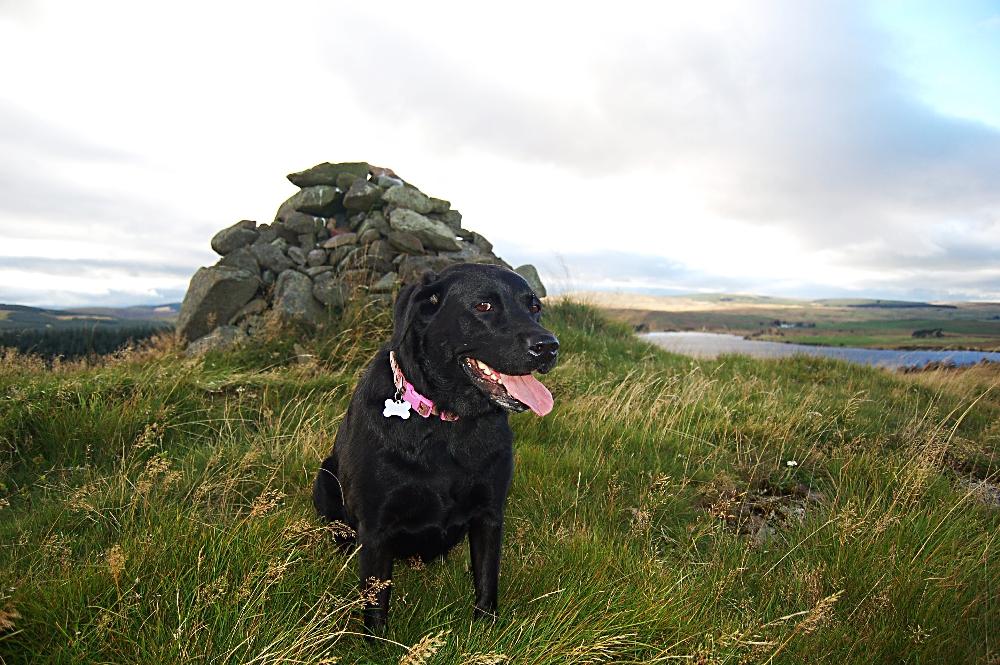 The Fatdog on Skea Craig