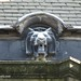 November 25th: Lion On The Roof