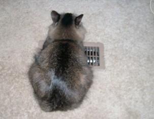 heater cat