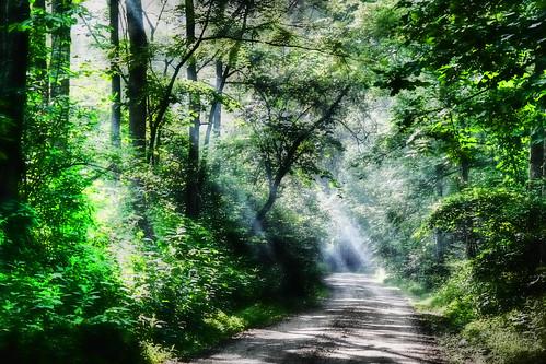 The Misty Wood