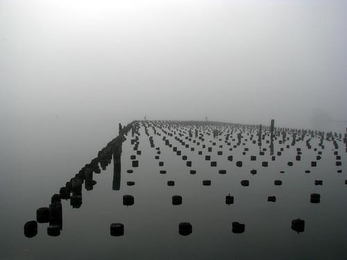fogmorn3_lowerharborMQT_0839