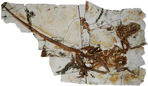 tianyuraptor2