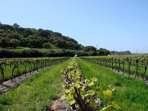 04-07-09 Riverbench Vineyard
