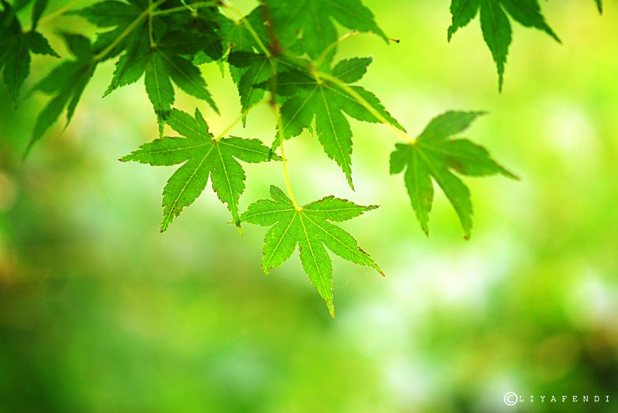still green..