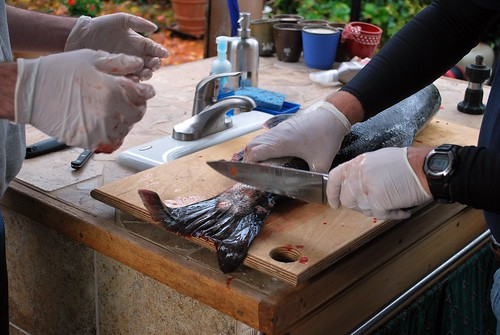Filleting a Fish 02