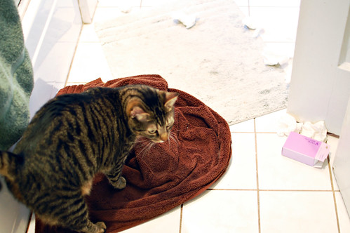 bad cat behavior, ep.12