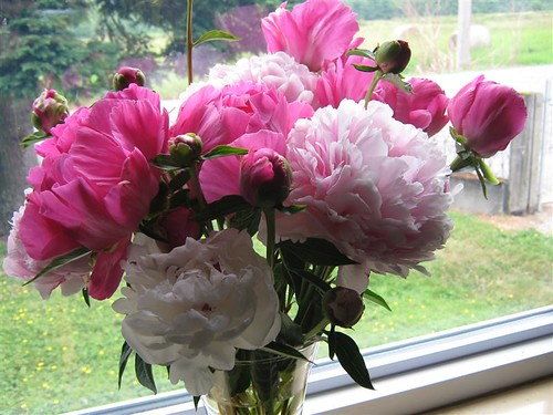 living room peonies