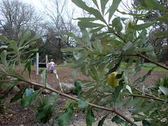 Colac playground 4
