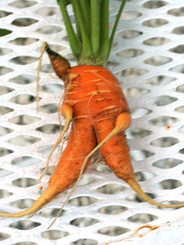 Crazy-Carrot