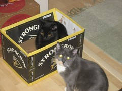 boozy kitties