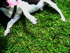joy is sunshine and bellyrub on grass