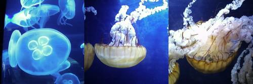 aquarium 1 collage