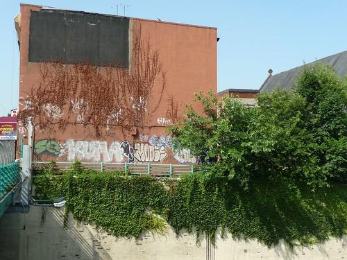 ivy graffiti