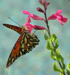 Happiness is a butterfly, which when pursued, ...