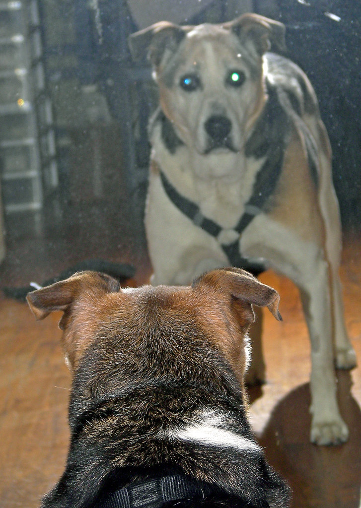 Patch in the Fitting Mirror