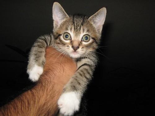 Boy Kitty